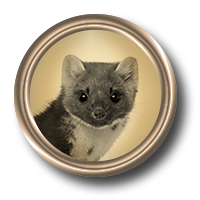 Eager weasel